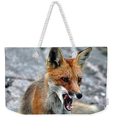 Weekender Tote Bag featuring the photograph Hungry Red Fox Portrait by Debbie Oppermann
