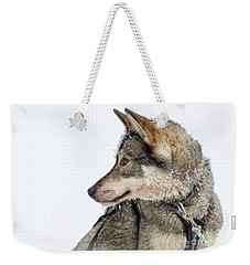 Weekender Tote Bag featuring the photograph Husky Dog by Delphimages Photo Creations
