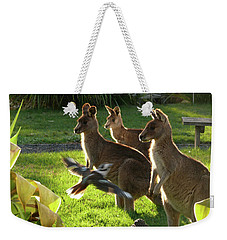 Weekender Tote Bag featuring the photograph I Fly To You by Evelyn Tambour