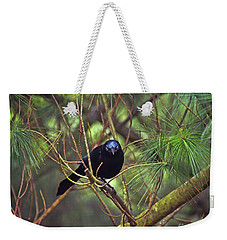 Weekender Tote Bag featuring the photograph I Have My Eyes On You - Grackle In The Pines by Kerri Farley
