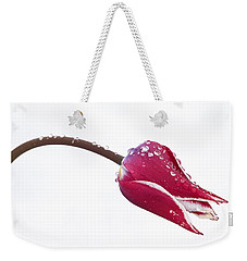 Weekender Tote Bag featuring the photograph Ice Drops On Tulip by James Steele