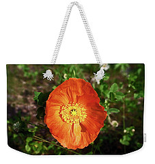 Weekender Tote Bag featuring the photograph Iceland Poppy by Sally Weigand