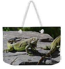 Iguana Perched On A Rock In The Sun Weekender Tote Bag