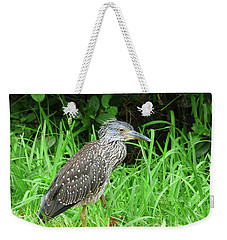 Weekender Tote Bag featuring the photograph Immature Black Crown Heron by Rosalie Scanlon