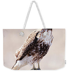 Immature Red Tailed Hawk Weekender Tote Bag