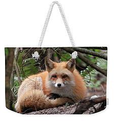 In Hiding Red Fox Weekender Tote Bag
