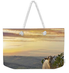 In The Warm Evening Sunlight  Weekender Tote Bag