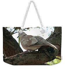 Weekender Tote Bag featuring the photograph Indian Ringneck Dove by Chris Flees