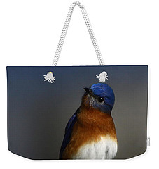 Inquisitive Bluebird Weekender Tote Bag