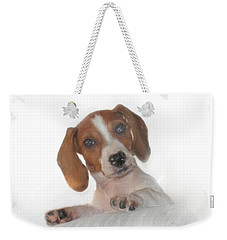 Weekender Tote Bag featuring the photograph Inquisitive Dachshund by David and Carol Kelly