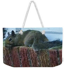 Weekender Tote Bag featuring the photograph Inquisitor Visitor by Denise Fulmer