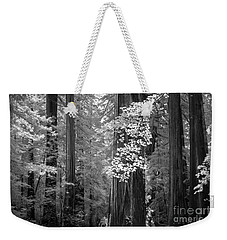 Inside The Groves Of The Redwoods Weekender Tote Bag by Craig J Satterlee