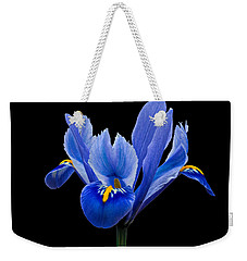 Iris Reticulata, Black Background Weekender Tote Bag