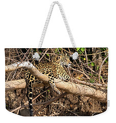 Jaguar In Repose Weekender Tote Bag by Wade Aiken