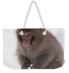 Weekender Tote Bag featuring the photograph Japanese Macaque Macaca Fuscata Baby by Konrad Wothe