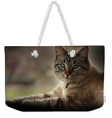 Weekender Tote Bag featuring the photograph Jaspurr by Kim Henderson