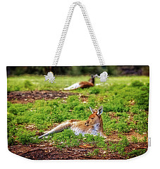 Weekender Tote Bag featuring the photograph Just Chillin, Yanchep National Park by Dave Catley