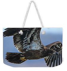 Weekender Tote Bag featuring the photograph Juvenile Bald Eagle by Coby Cooper