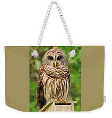 Juvenile Barred Owl Weekender Tote Bag