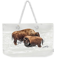 Juvenile Bison With Adult Bison Weekender Tote Bag by Sue Smith