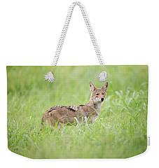 Juvenile Coyote Weekender Tote Bag