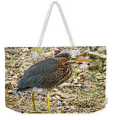 Weekender Tote Bag featuring the photograph Juvenile Green Heron by Ricky L Jones