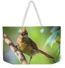Juvenile Northern Cardinal Weekender Tote Bag