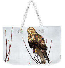 Juvenile Rough-legged Hawk  Weekender Tote Bag by Ricky L Jones