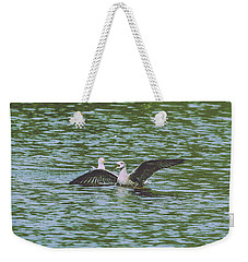 Weekender Tote Bag featuring the photograph Juvenile Seagull In A Water by Jacek Wojnarowski
