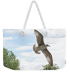 Weekender Tote Bag featuring the photograph Juvenile Seagull In Flight by Jacek Wojnarowski