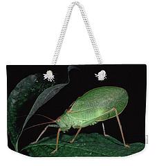 Katydid At Night Weekender Tote Bag