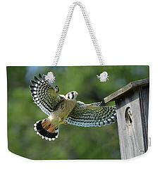 Kestrel Fledgling Visits Nest Weekender Tote Bag by Alan Lenk