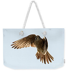 Weekender Tote Bag featuring the photograph Kestrel Hover by Mike Dawson