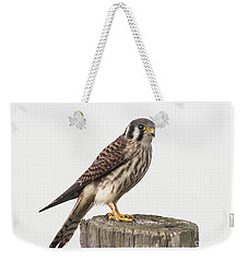 Weekender Tote Bag featuring the photograph Kestrel Portrait by Robert Frederick