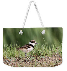 Killdeer - 24 Hours Old Weekender Tote Bag by Travis Truelove