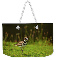 Killdeer Weekender Tote Bag by Karol Livote