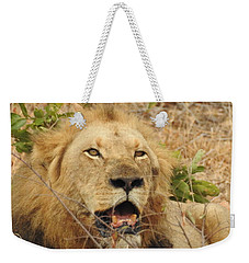 Weekender Tote Bag featuring the photograph King by Betty-Anne McDonald