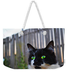 Weekender Tote Bag featuring the photograph Kitten At Twilight  by Naomi Burgess