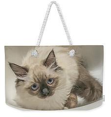 Kitty Blue Eyes Weekender Tote Bag