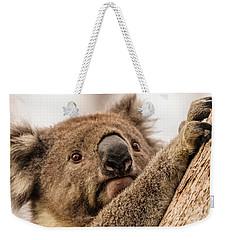Koala 3 Weekender Tote Bag by Werner Padarin