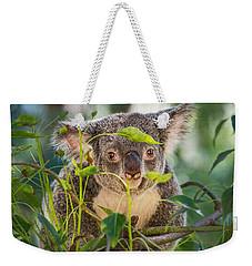 Koala Leaves Weekender Tote Bag by Jamie Pham
