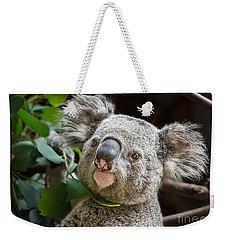 Koala Male Portrait Weekender Tote Bag by Jamie Pham
