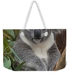 Koala Phascolarctos Cinereus Weekender Tote Bag by Zssd