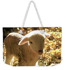 Lamb All Aglow Weekender Tote Bag