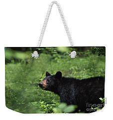 Weekender Tote Bag featuring the photograph Large Black Bear by Andrea Silies