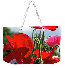 Weekender Tote Bag featuring the photograph Last Poppies Of Summer by Baggieoldboy