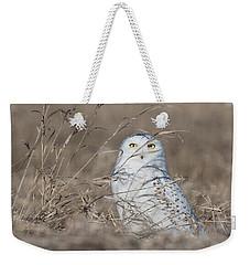 Last Year Of The Snowy Owls... Weekender Tote Bag