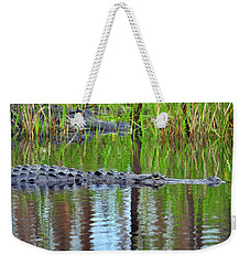 Weekender Tote Bag featuring the photograph Later Gator by Al Powell Photography USA