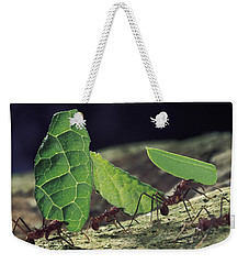Leafcutter Ant Atta Cephalotes Workers Weekender Tote Bag by Mark Moffett