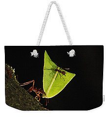 Leafcutter Ant Atta Sp Carrying Leaf Weekender Tote Bag by Cyril Ruoso